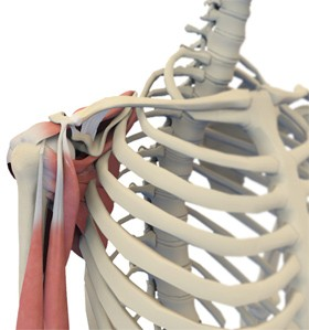 acromioclavicular-joint-injuries.